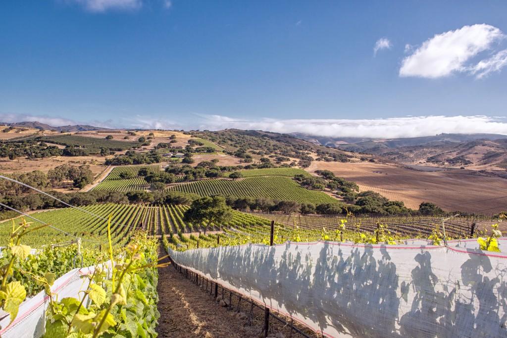 Die sanften Weinberge der Santa Rita Hills
