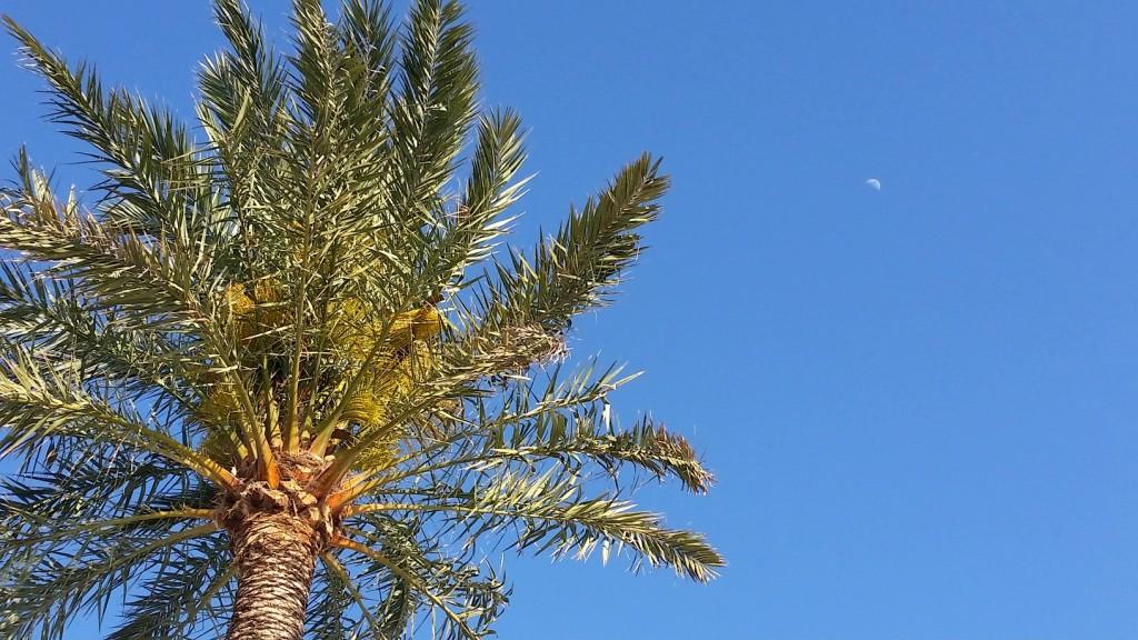 Blue Marlin Restaurant Ibiza MyStylery Hotspot Ibiza-Love 8