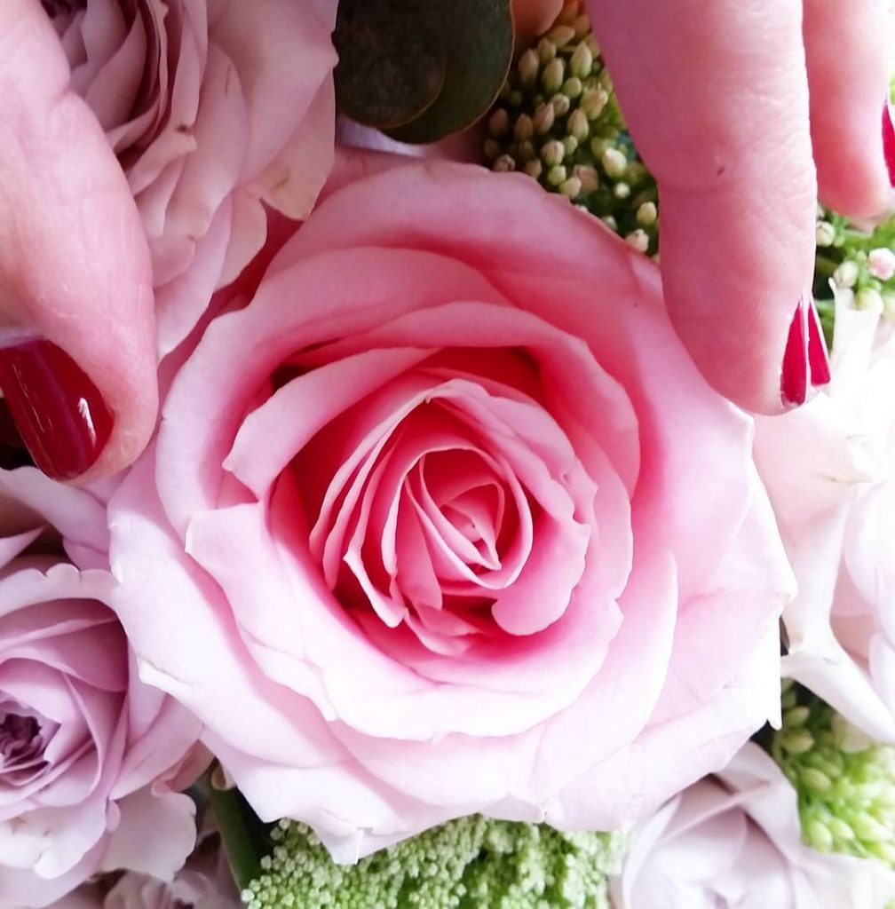 A rose is a rose is a rose My Fridayflowerhellip