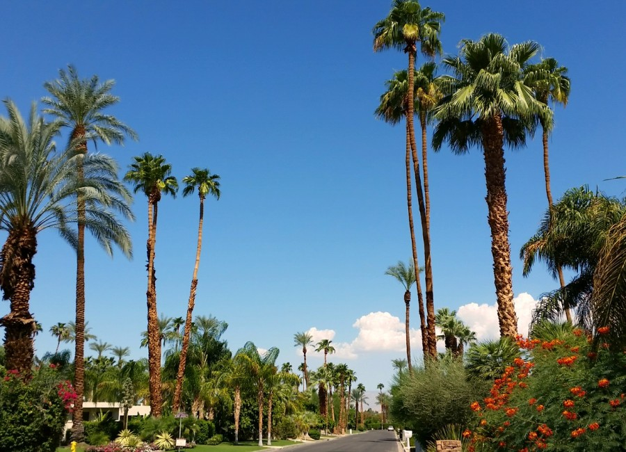 Palm Springs: A German in the California Desert