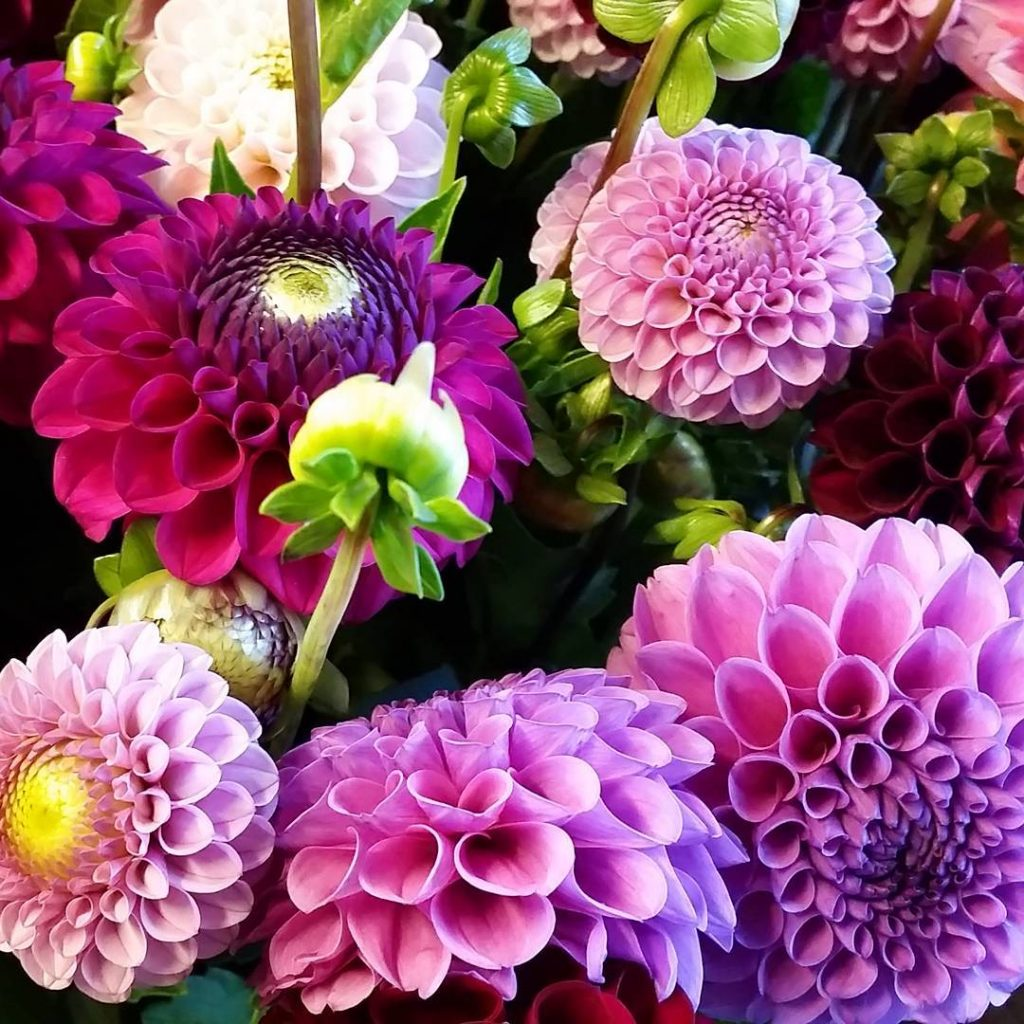My Fridayflower! Love it Color up your life and enjoyhellip