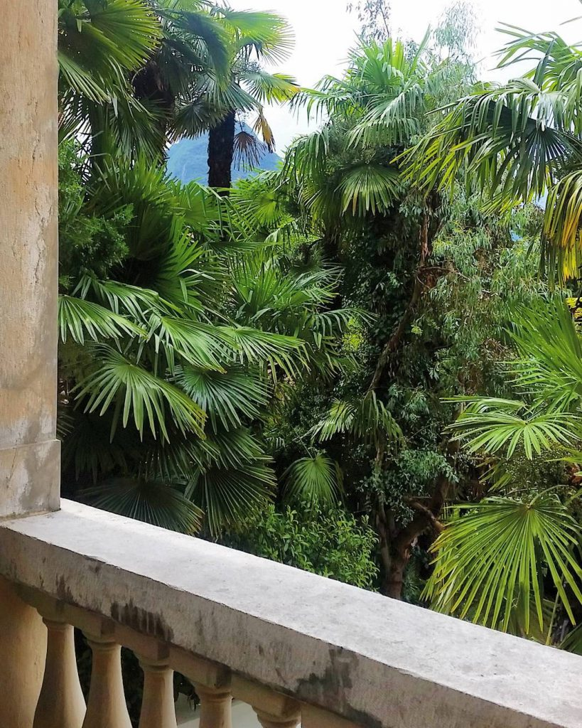 After the rain the palms infront of my balcony lookhellip