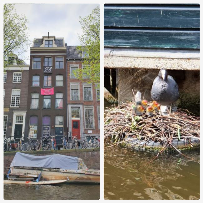 Besetztes Haus und besetztes Nest in Amsterdam